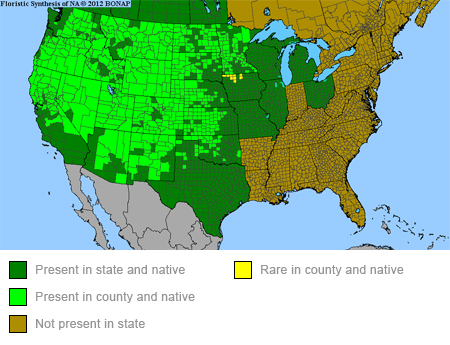 Showy Milkweed Range Map