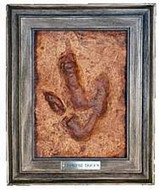 Theropod Track (Dinosaur Fossil Reproduction) Mid to Late Jurassic Period - Photo Museum Store Company