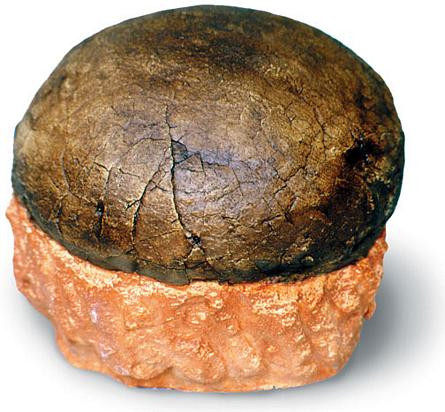 Hadrosaur Egg - Photo Museum Store Company