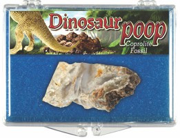 Coprolite - Dinosaur Dung Box, 65 to 500 Million Years Old - Actual Authentic  Fossil - Photo Museum Store Company