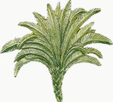 Claude Monet's Palm tree brooch, enameled, Brooklyn Museum of Art - Photo Museum Store Company