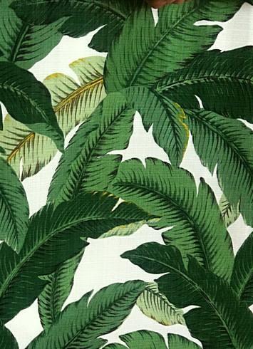 Swaying Palms Aloe Indoor