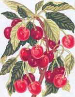 Cherries Canvas only By Grafitec