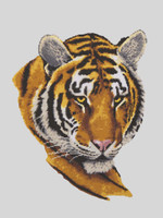 Tiger Portrait Canvas only By Grafitec