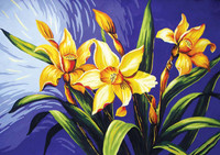 Daffodils Canvas only By Grafitec