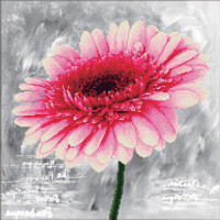 Pink Dahlia No Count Cross Stitch Kit By Riolis