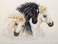 Wild Stallions CANVAS By Grafitec
