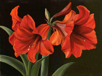 Red Trumpet Flowers CANVAS By Grafitec