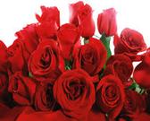 Roses -12 stems