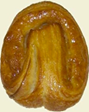 Butterhorn Danish -1ct