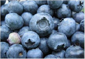Central Market Organics Frozen Wild Blueberry - 10 oz