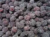 Frozen Whole Blackberries - 16 oz