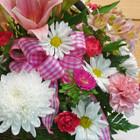 Blooms of Spring (SCF17E14)