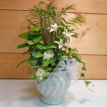 Botanical Blessings (SCF17PL02)