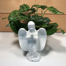 Prayers & Blessings Plant-  SCF18D29 - Send  Sympathy Flowers & Plants  - Same day delivery throughout Western New York