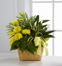 Loving Light Dishgarden by Savilles Country Florist. Flower delivery to Orchard Park, Hamburg, West Seneca, East Aurora, Buffalo, NY and surrounding suburbs.