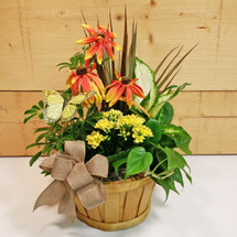 Sunrise Butterfly Garden by Savilles Country Florist. Flower delivery to Orchard Park, Hamburg, West Seneca, East Aurora, Buffalo, NY and surrounding suburbs.