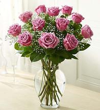 Rose Elegance Lavender (105257)