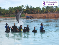 Private Accessible 3.5 hour Nassau Dolphin Experience