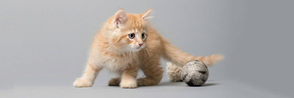 Kitten with handmade wool ball made in America