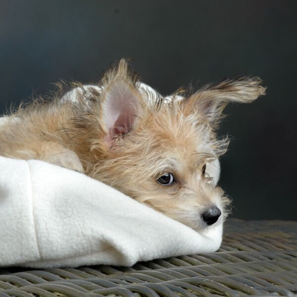 petsleepingbag-organiccotton-smalldog2.jpg
