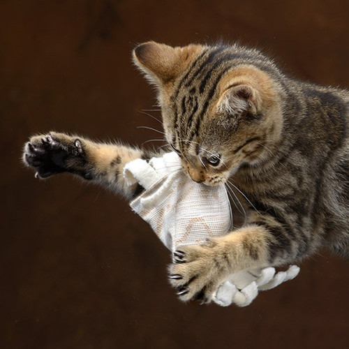 Catnip cat toy. Certified organic catnip and cotton. Durable and super fun!  Cats love them!