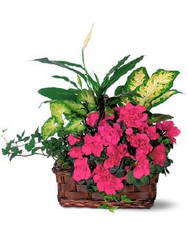 European Plant Basket