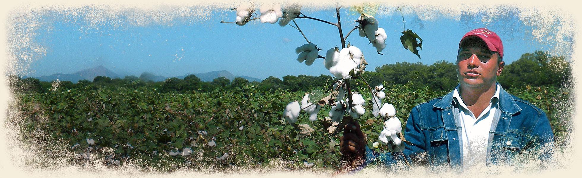details-organic-cotton-maggies-ban2.jpg