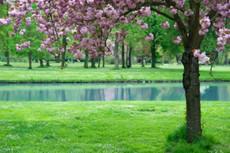 Fragrance Refills - Springtime