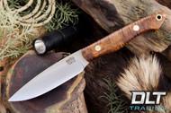 Kalahari Thorn CPM154 Dark Curly Maple - Red Liners - Brass Hardware - #1