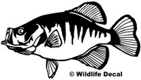 We have Crappie Decals and Car Stickers. Personalize any of our decals with your choice of text, color and size. These are perfect for trucks, cars, windows, gun cabinets, 4-wheelers, boats, mailboxes or any clean semi-smooth surface.