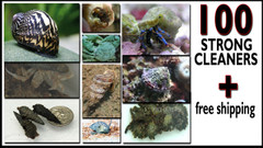 100 Strong Saltwater Clean Up Crew - Ships FREE