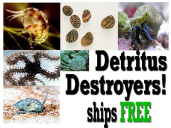 6 Pack Saltwater Detritus Clean Up Crew - Ships FREE
