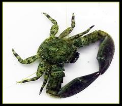 Diversify Algae Crew - 75 + Amazing Crew Members Attack