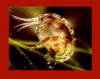 Amphipods & Copepods