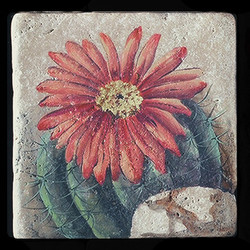 "Eagle Claw Cactus 6""x6"" Deco Tile"