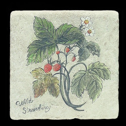 "Wild Strawberry 6""x6"" Deco Tile"