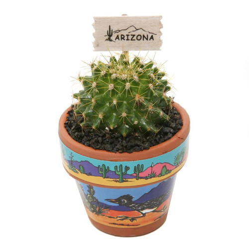 Mini Cactus Magnet