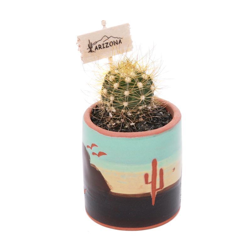 mini cactus arizona gifts. Black Bedroom Furniture Sets. Home Design Ideas