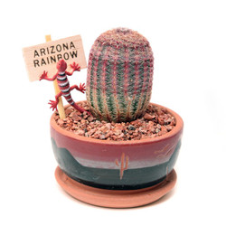 Arizona Rainbow Cactus - 3.5 inch
