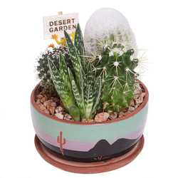 Cactus Garden - 5 inch