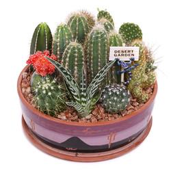 Cactus Garden - 9 inch