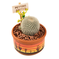 Petting Cactus - Saguaro Sunset - 3.5 inch