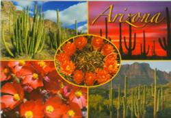Cactus Scenes Postcard - Pack of 100