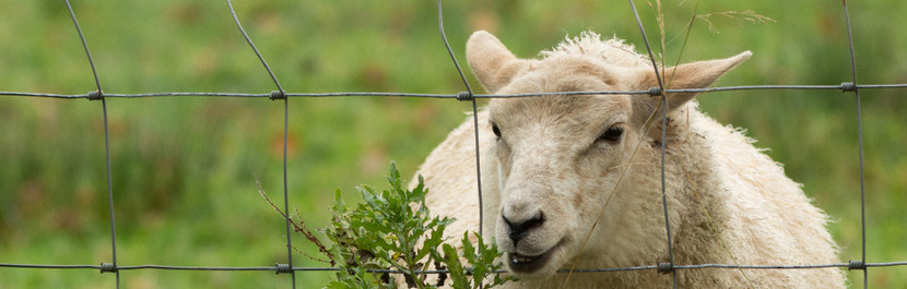 A Complete Guide To Livestock Fencing