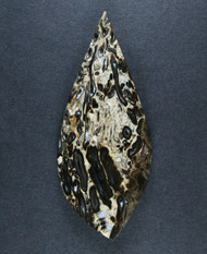 Gorgeous Indonesian Petrified Palm Wood Designer Cabochon  #17160