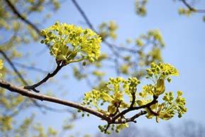 springblossom.jpg