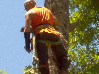 arm-chaps-tree-service-1.jpg