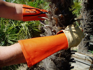 arm-chaps-tree-trimming-safety-orange.jpg