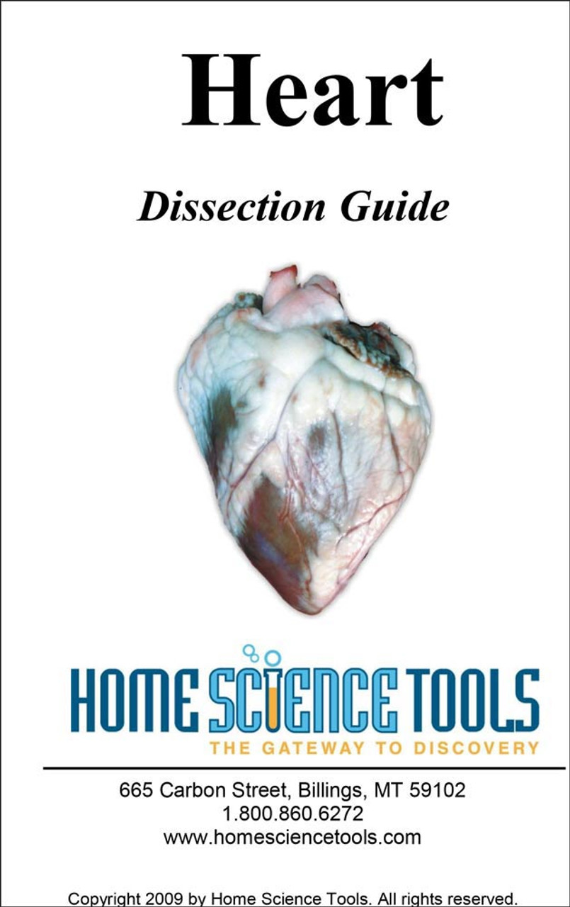 On the Cutting Edge: Sheep Heart Dissection
